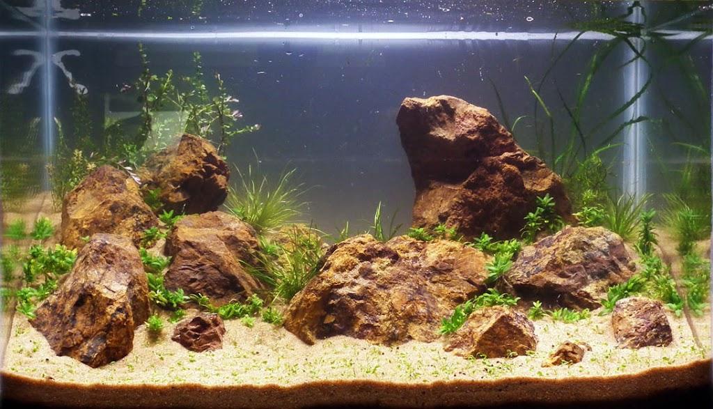 Adição das plantas aquáticas no aquário