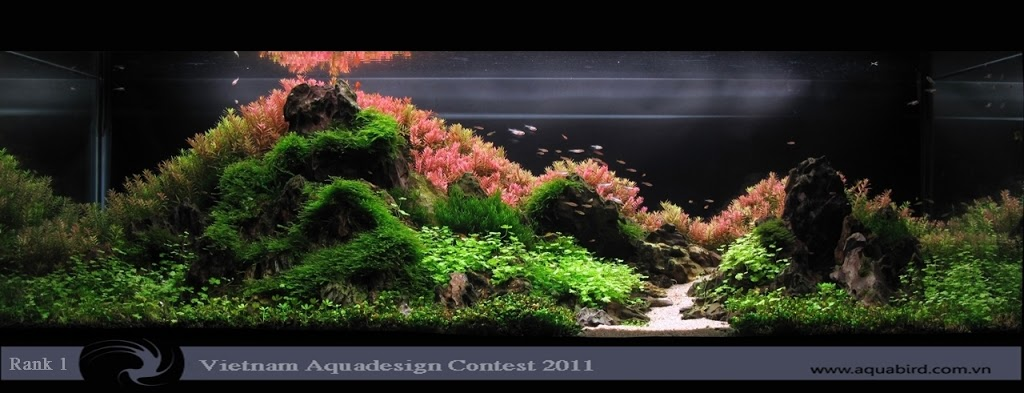 Aquatic-Design-Contest-2011-1-25C2-25BA