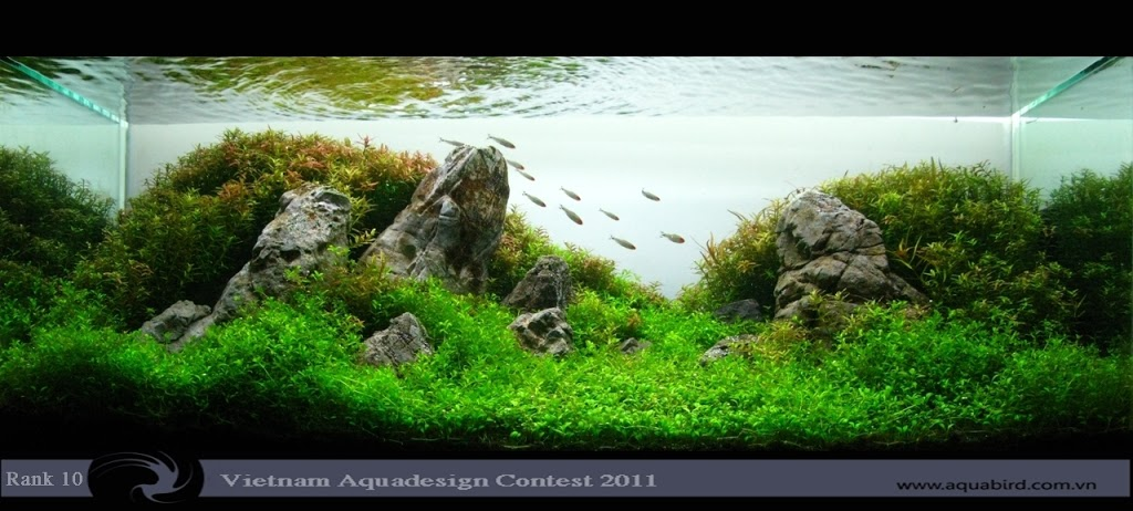 Aquatic-Design-Contest-2011-10-25C2-25BA