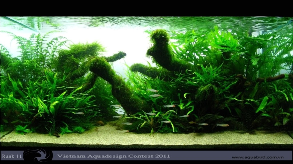 Aquatic-Design-Contest-2011-11-25C2-25BA