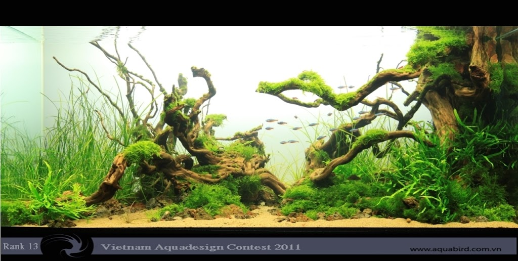 Aquatic-Design-Contest-2011-13