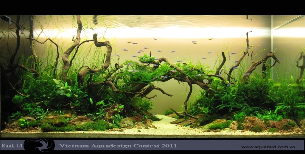 Aquatic-Design-Contest-2011-14