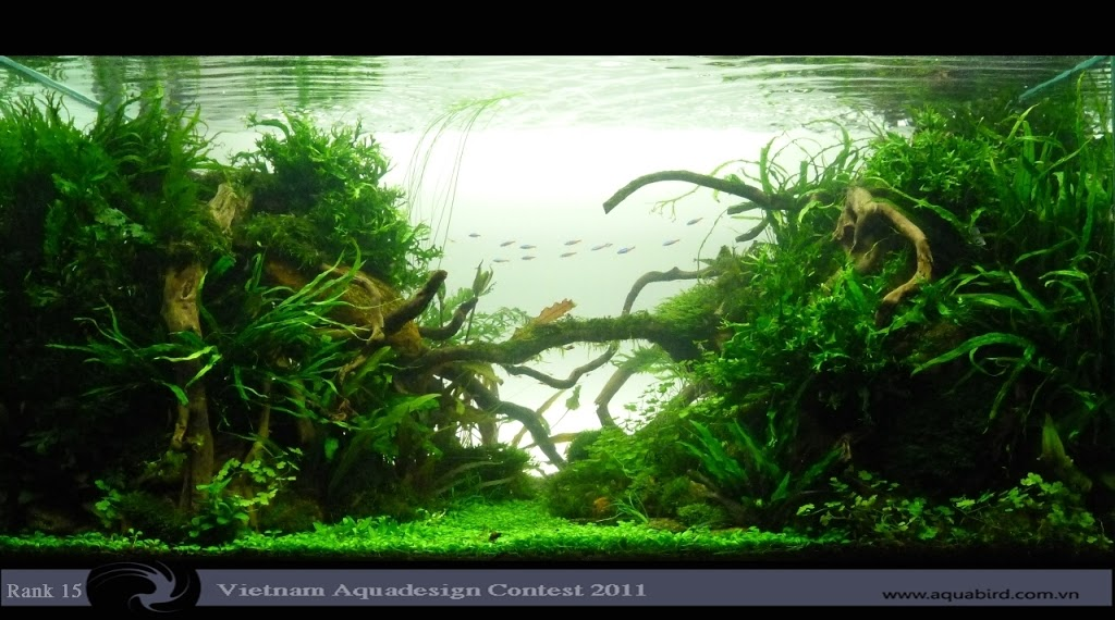 Aquatic-Design-Contest-2011-15