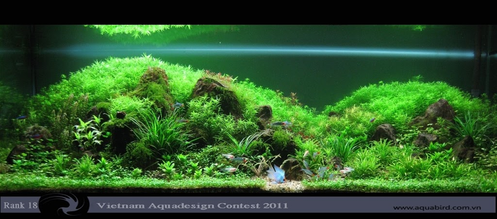 Aquatic-Design-Contest-2011-18