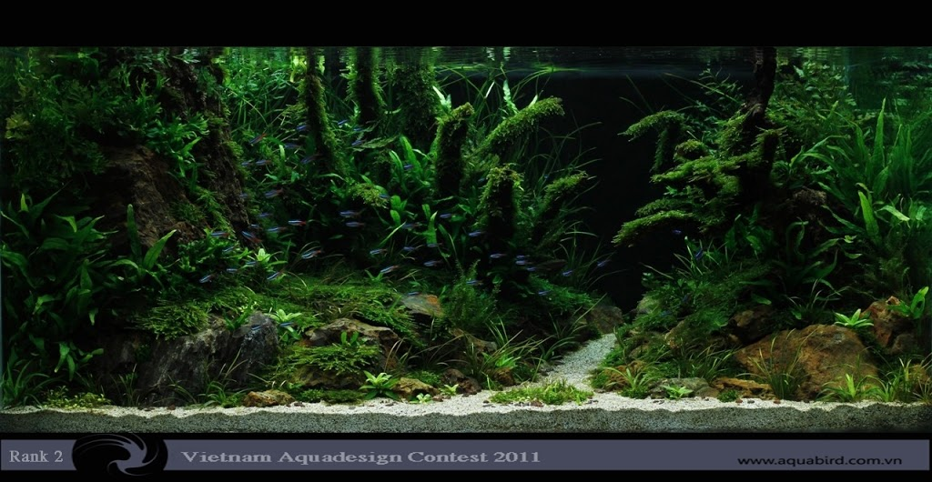 Aquatic-Design-Contest-2011-2-25C2-25BA