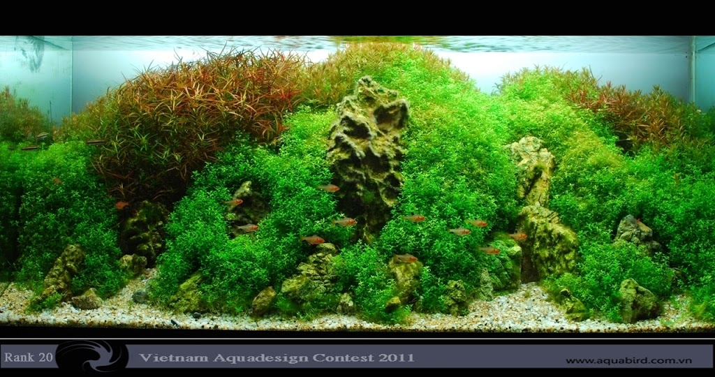 Aquatic-Design-Contest-2011-20-25C2-25BA