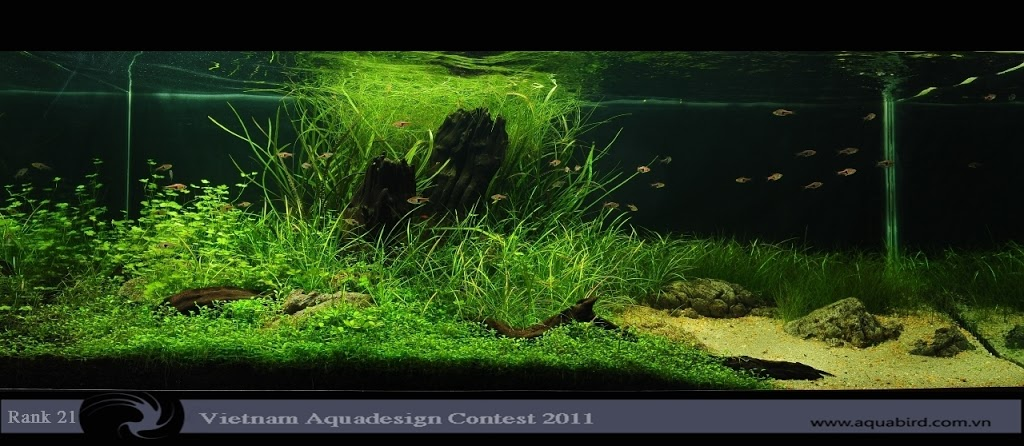 Aquatic-Design-Contest-2011-21