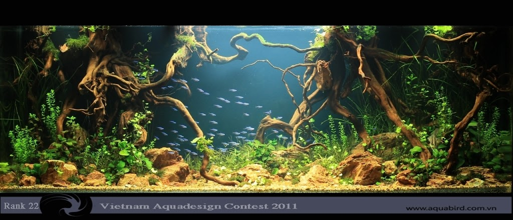 Aquatic-Design-Contest-2011-22