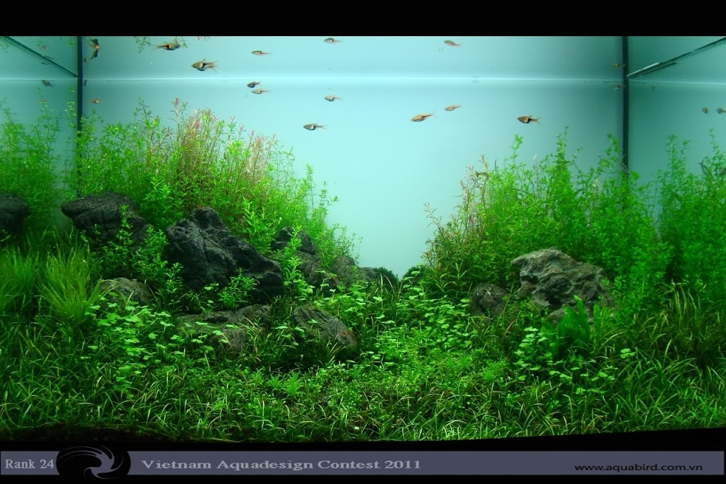 Aquatic-Design-Contest-2011-24-25C2-25BA