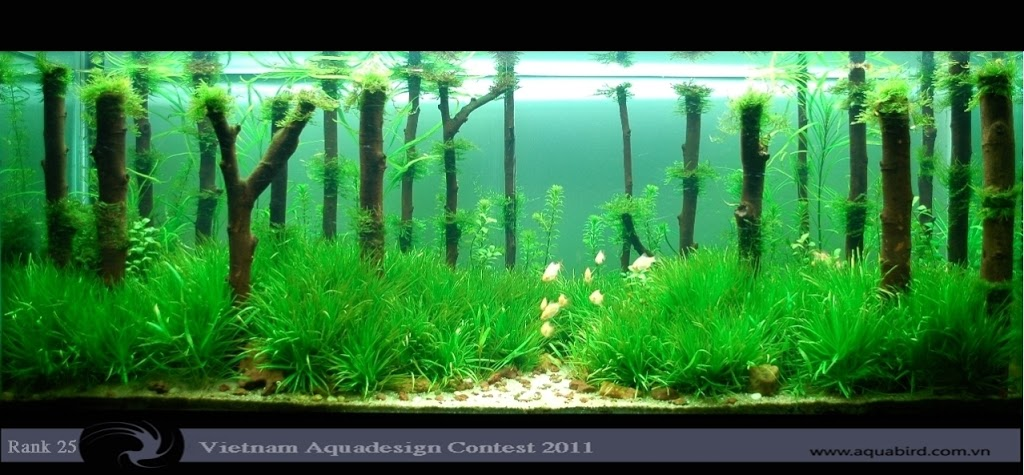 Aquatic-Design-Contest-2011-25