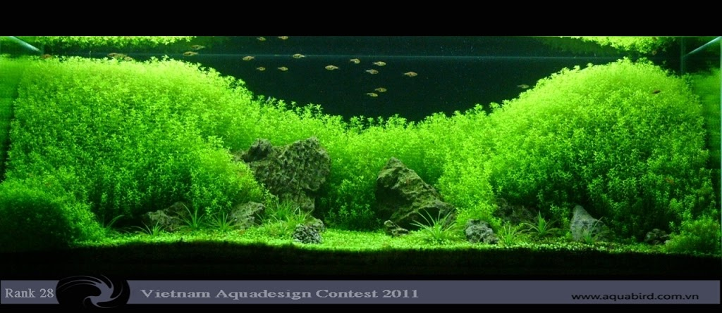 Aquatic-Design-Contest-2011-28-25C2-25BA