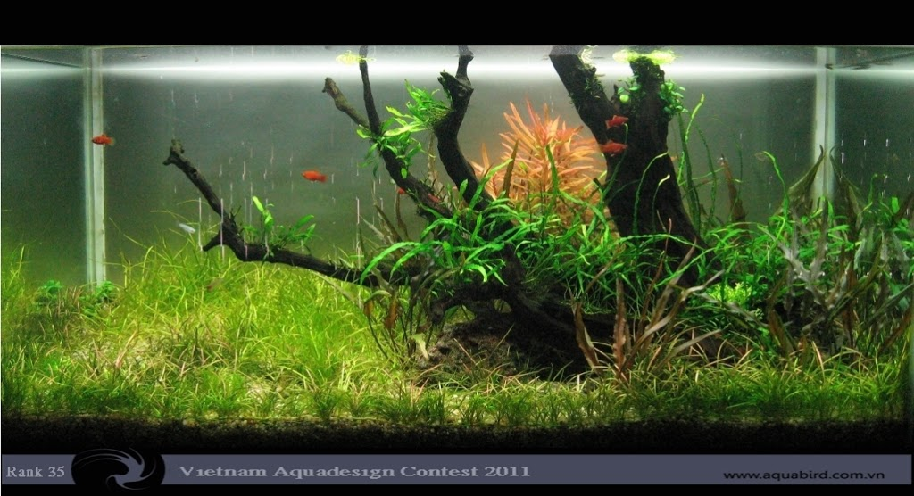Aquatic-Design-Contest-2011-35-25C2-25BA