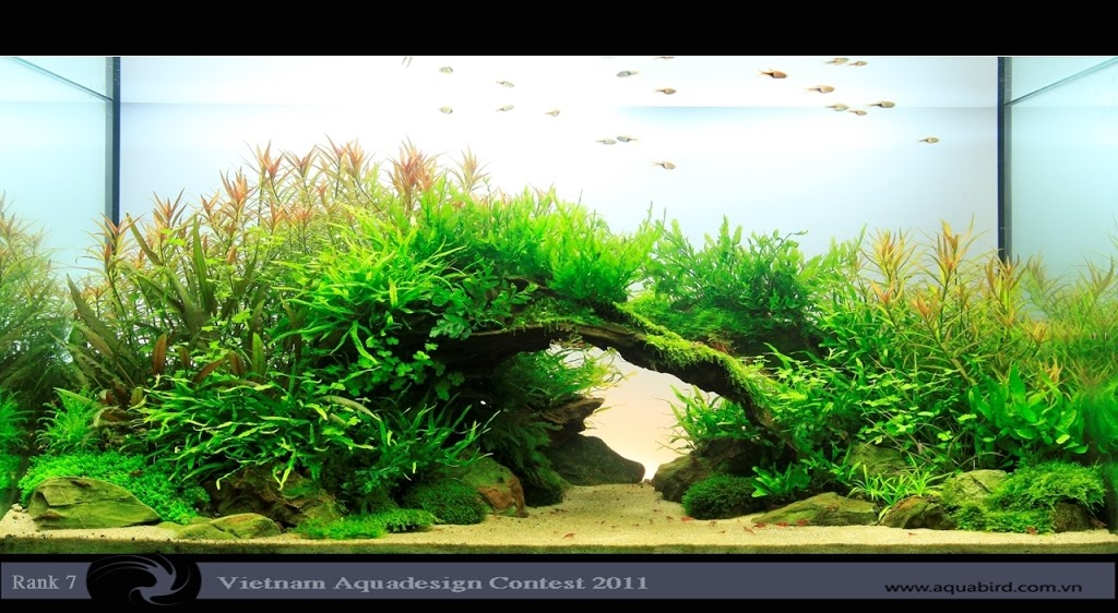 Aquatic-Design-Contest-2011-7-25C2-25BA