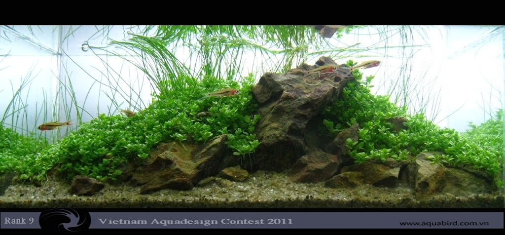 Aquatic-Design-Contest-2011-9-25C2-25BA