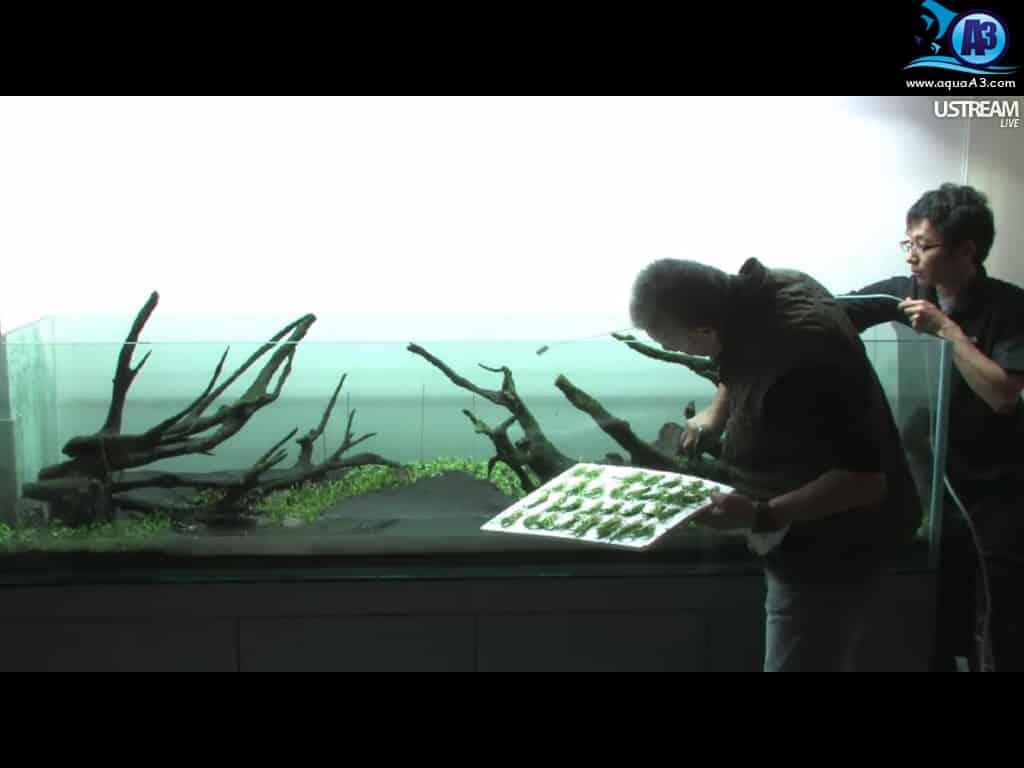 Montagem ao vivo do mestre Takashi Amano