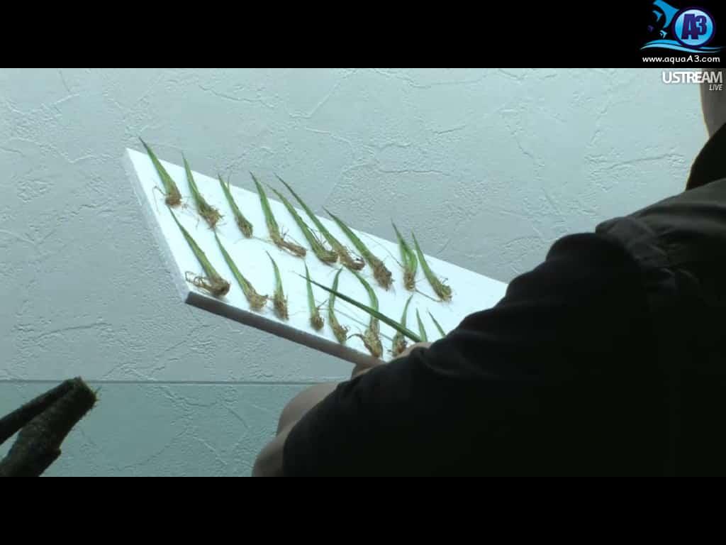 Review: Montagem ao vivo do mestre Takashi Amano