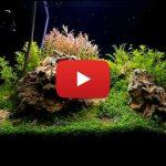 1# Guia do Aquapaisagista: Como podar um Aquário Plantado.