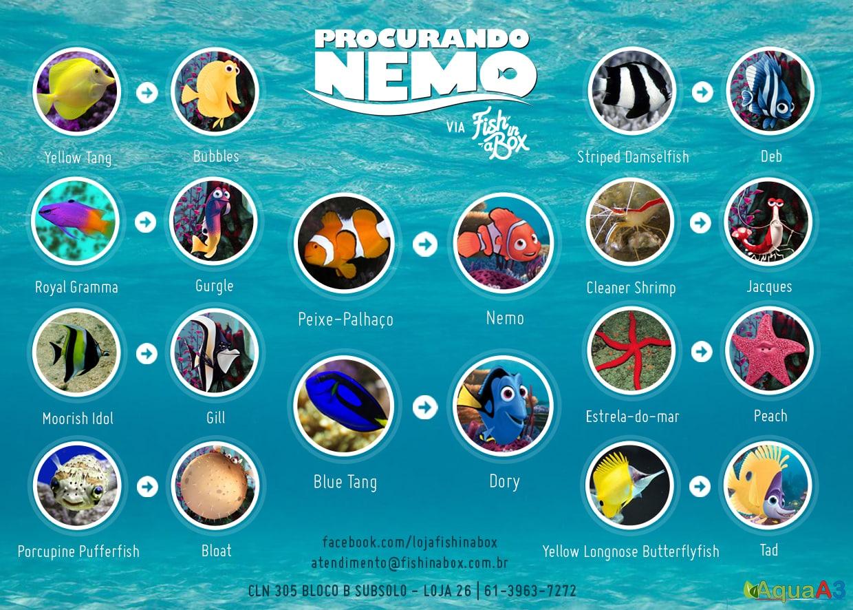 Procurando Nemo na vida real