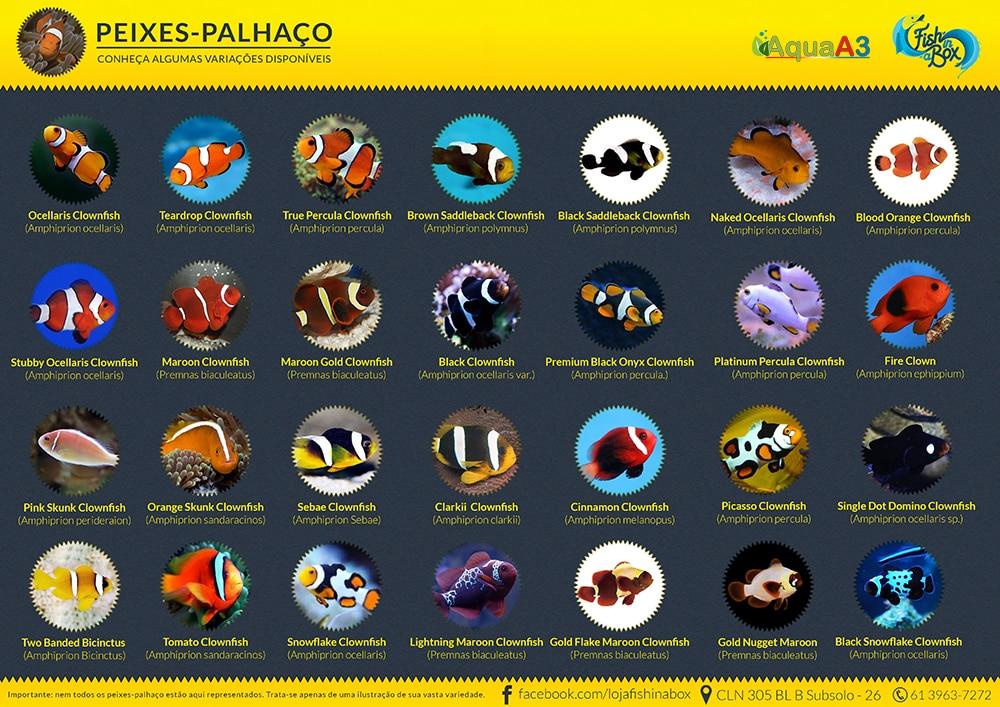 Variedades de peixe palhaço