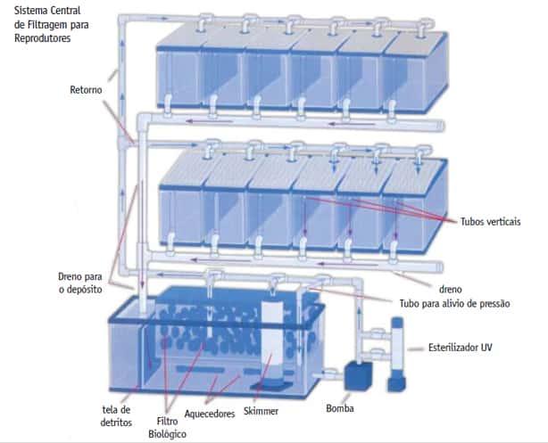 Requisitos básicos para montagem de um sistema de criação de peixe palhaço