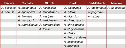 Compartilhamento de similaridades morfológicas entre peixes palhaço
