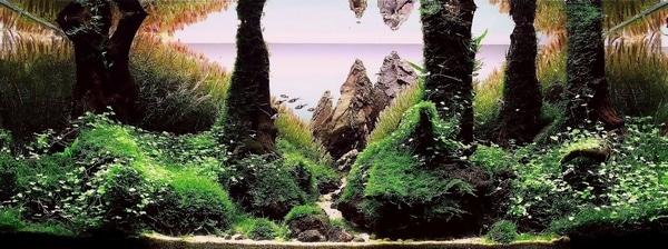 1 • Resultado do Concurso: TBNAD - The Best Nature Aquarium's Design 2011