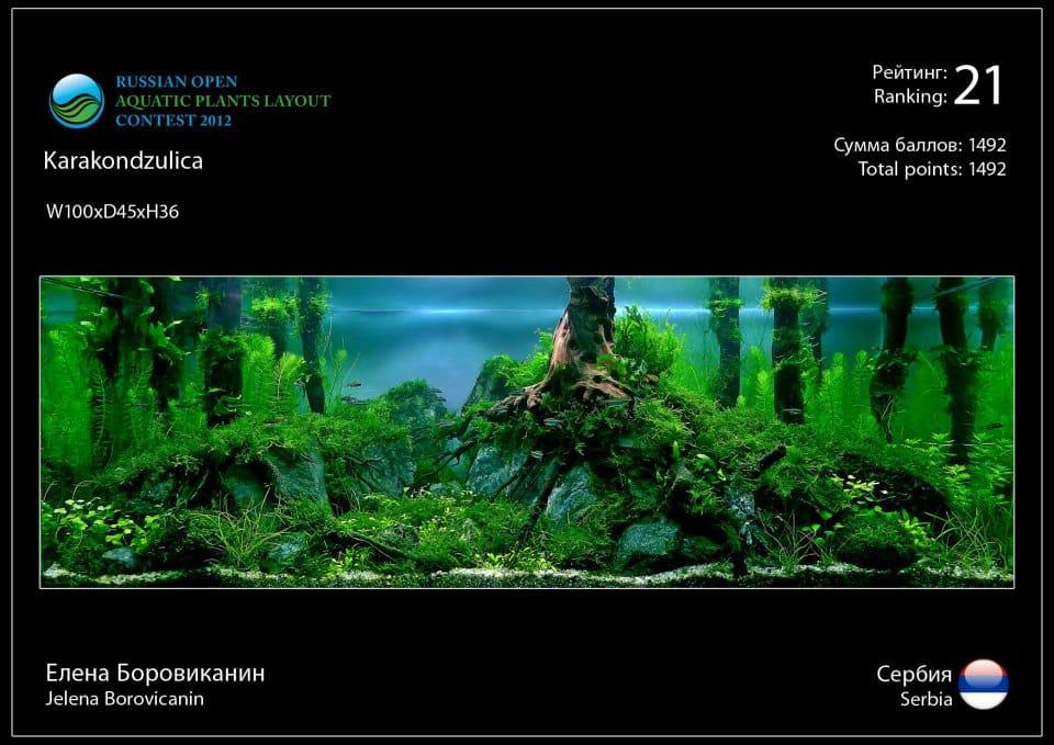 Rank 21 Russian Open Aquatic Plants Layout Contest