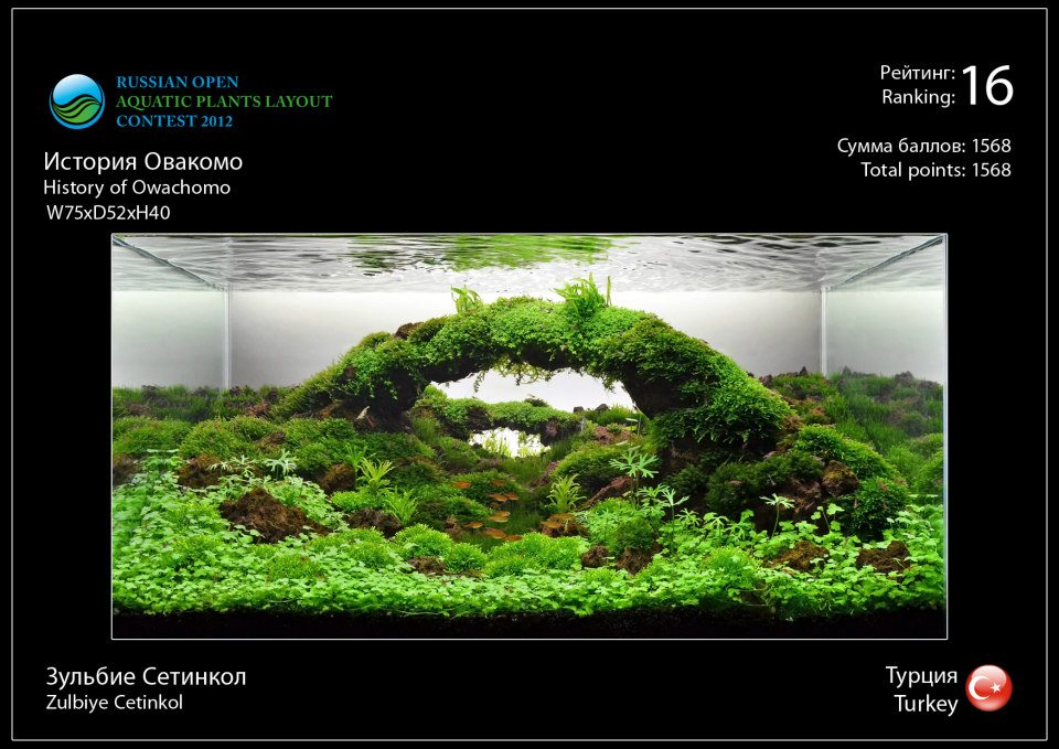 Rank 16 Russian Open Aquatic Plants Layout Contest