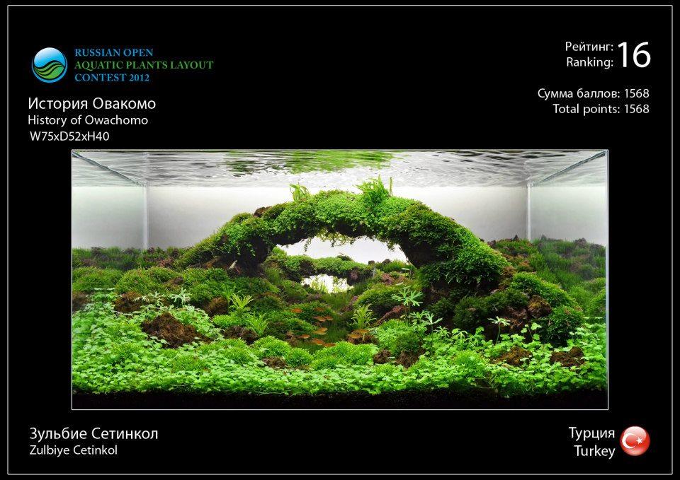 Rank 16 Russian Open Aquatic Plants Layout Contest