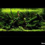 DEIXA MAIS PESADO • Como escolher o melhor fundo para o nosso aquário plantado