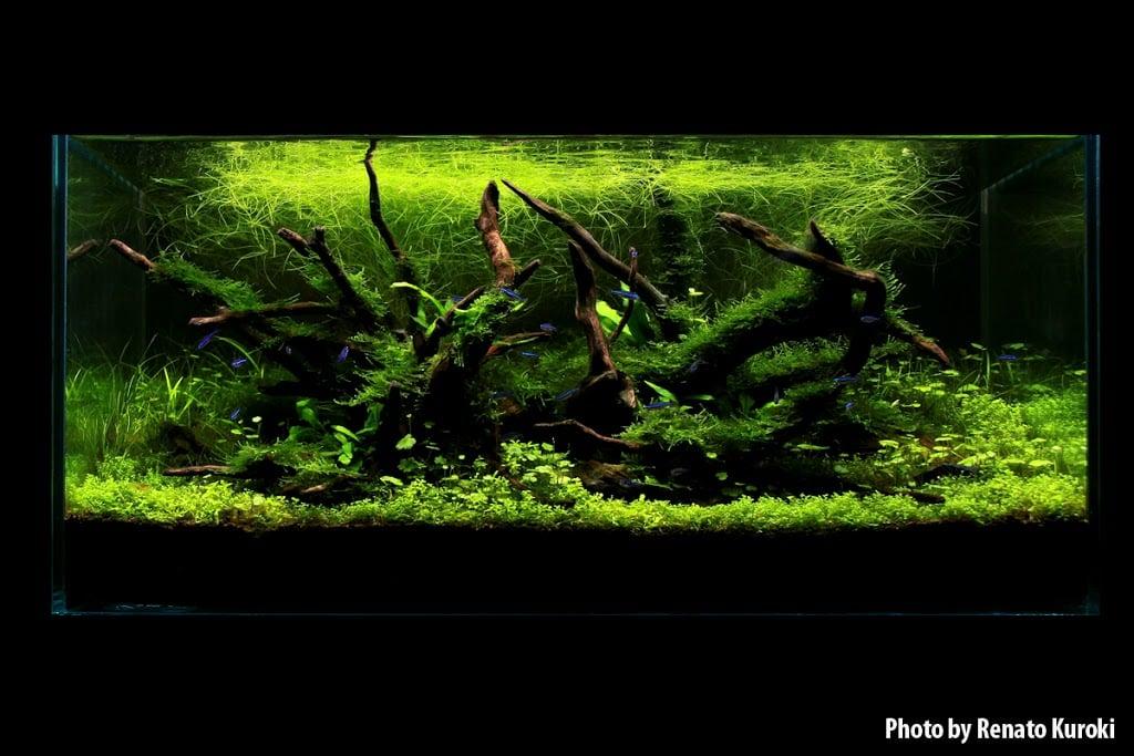 Como escolher o melhor fundo para o nosso aquário plantado