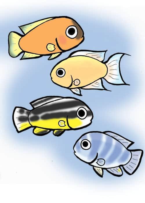 Lemon cichlid, fairy cichlid, golden cichlid, zebra cichlid