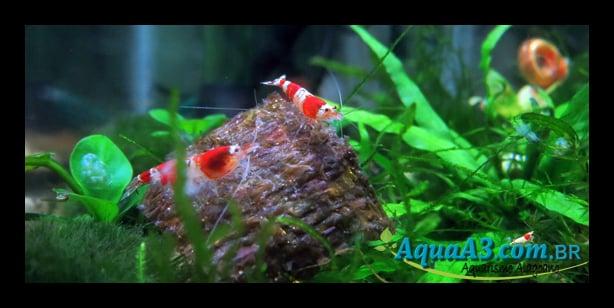 Alga Nori Red-Crystal