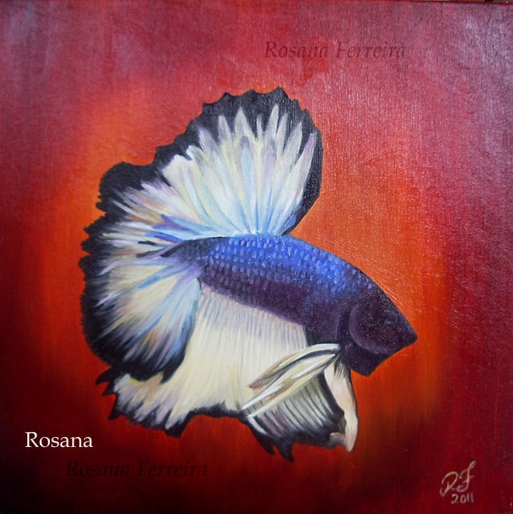 Arte no aquarismo - Betta 2