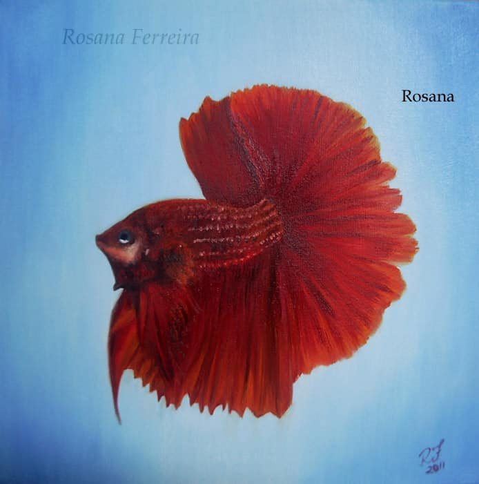 Arte no aquarismo - Betta
