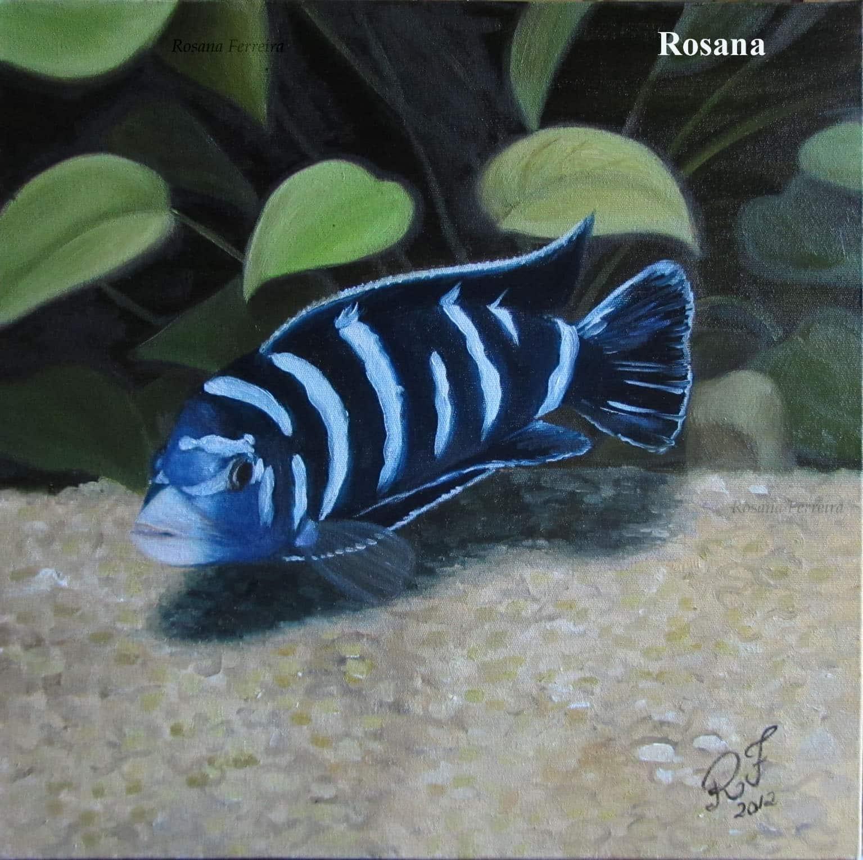 Arte no aquarismo - Demasoni