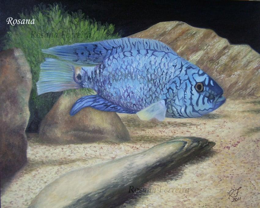 Arte no aquarismo - JackBlue