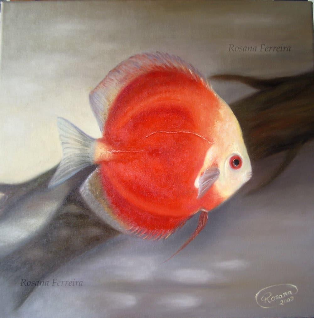 Arte no aquarismo - Peixe Disco