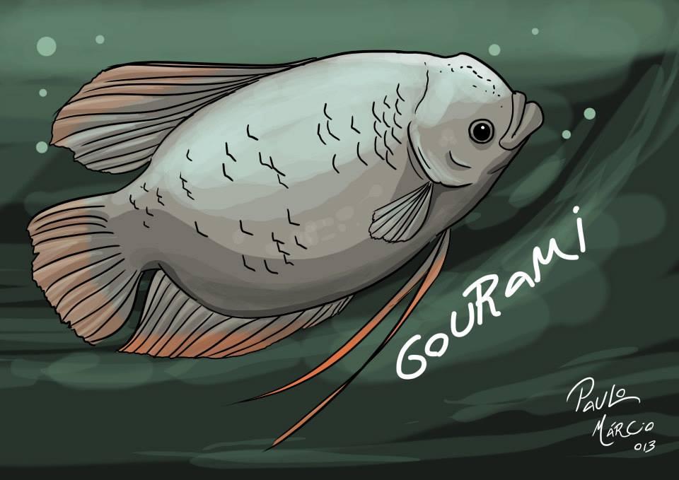 Peixe-gigante-Gourami