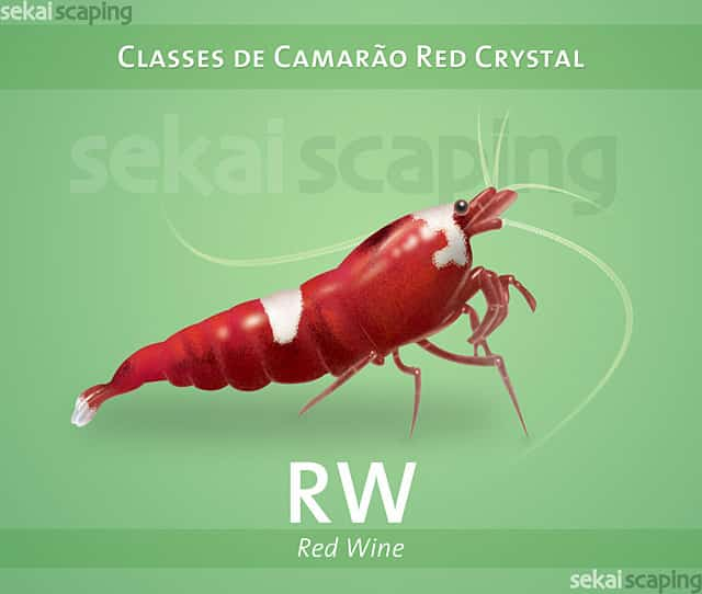"""""""Classificação dos Camarões Red Crystal"""""""