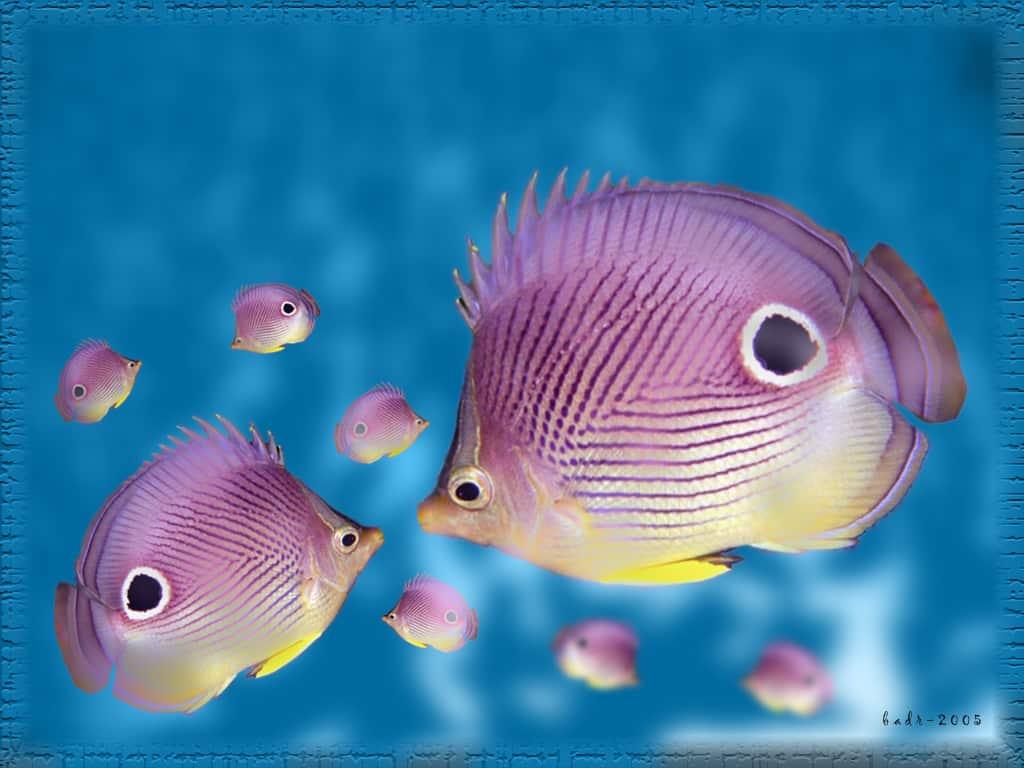 SuperPurple_Fish_by_badr