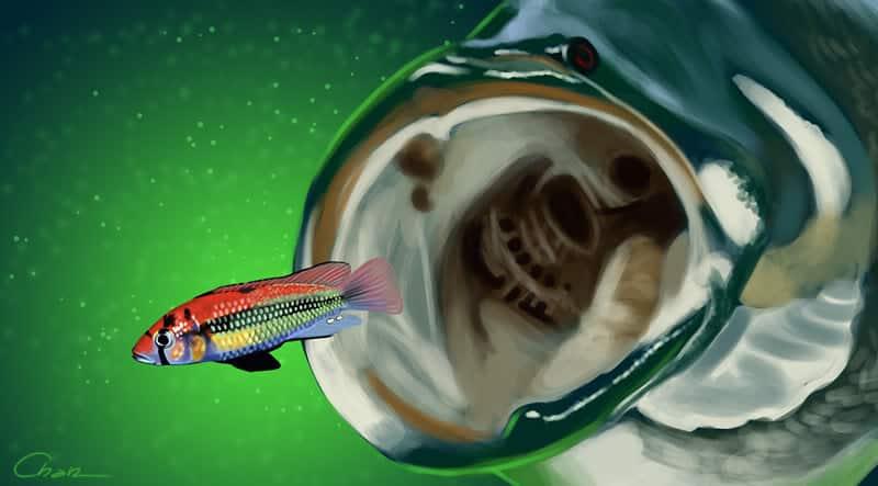 """""""Os males da introdução de espécies exóticas em ambientes aquáticos""""."""