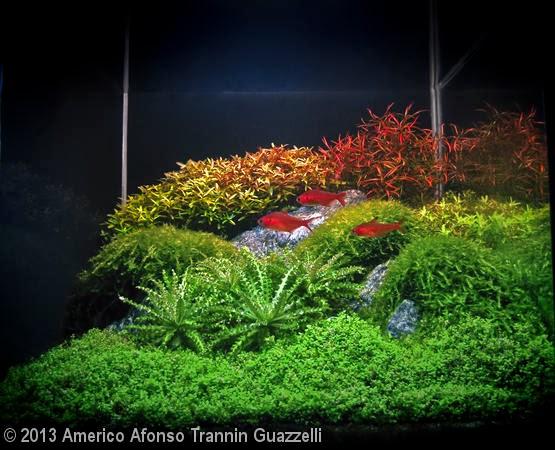 Americo Afonso Trannin Guazzelli (Londrina – PR)