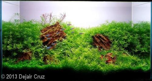 Dejair Cruz (Maringa – PR)