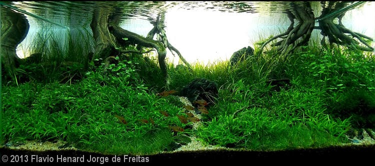 Flavio Henard Jorge de Freitas (Rio de Janeiro – RJ)