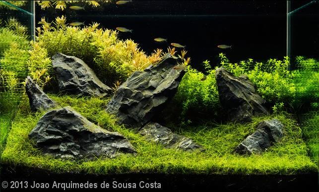 João Arquimedes de Sousa Costa (TAGUATINGA – DF)