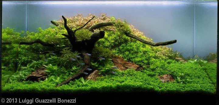 Luiggi Guazzelli Bonezzi (Londrina – PR)