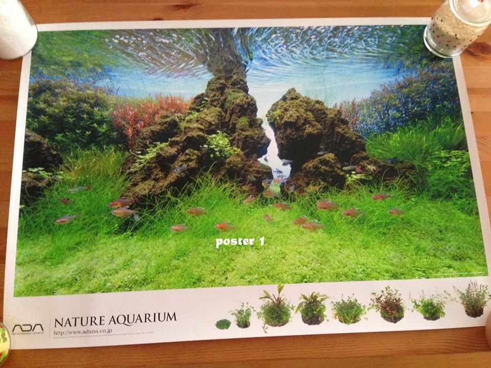 1525663_Sorteio: Nature Aquarium Calendar 2014_1917563463_n