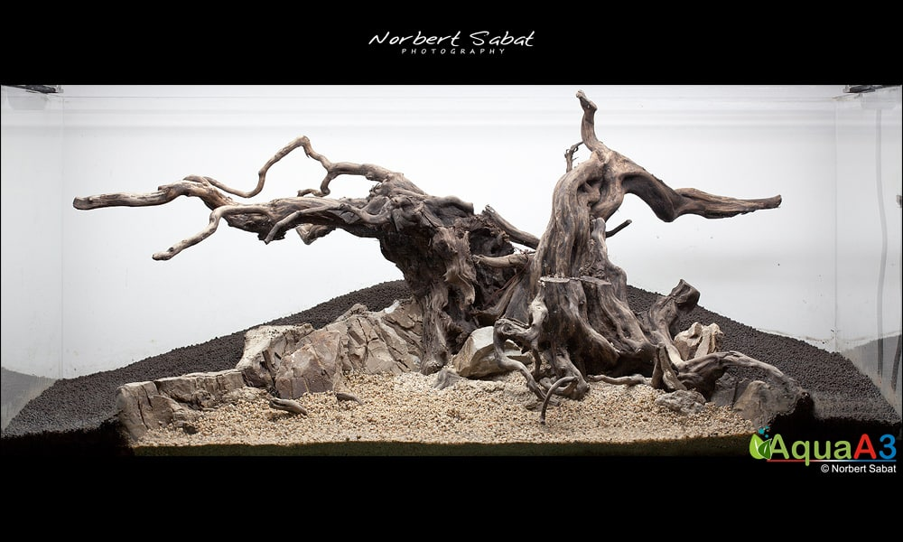 The Tree By Norbert Sabat