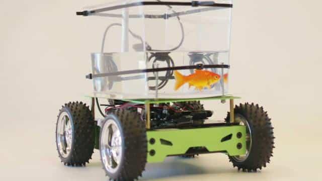 fish-car